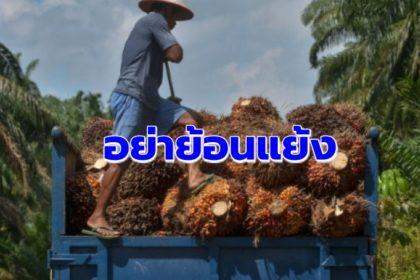 รูปข่าว อย่าให้นโยบาย 'พลังงาน-ปาล์ม' ย้อนแย้ง จนทิ่มแทง 'เกษตรกร'