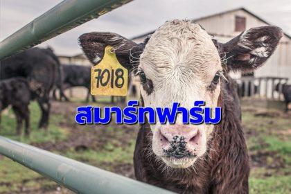 รูปข่าว โชว์ ' สมาร์ทฟาร์มปศุสัตว์ ' 19 แห่ง ลดต้นทุนพลังงาน 35 ล้านบาท