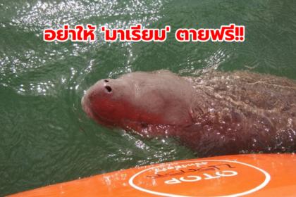 รูปข่าว 'โฆษกรัฐบาล' วอนอย่าให้ 'มาเรียม' ตายฟรี!!