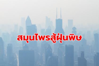 รูปข่าว พลิกมูลค่าสมุนไพรไทยสู่อาหารเสริมสู้ PM2.5