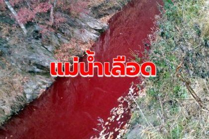รูปข่าว เกาหลีใต้เจอแม่น้ำเลือด เหตุเลือดจากซากหมูที่ถูกกำจัดไหลซึมลงไป