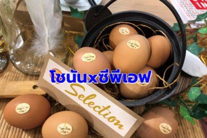 รูปข่าว 'โชนัน' จับมือ 'ซีพีเอฟ' เสิร์ฟไข่ไก่สดปลอดสาร  'CP Selection Cage Free Egg'