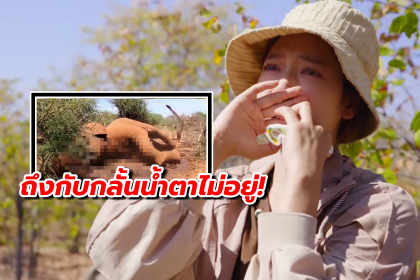 รูปข่าว พัคชินฮเย กลั้นน้ำตาไม่อยู่ หลังเห็นสัตว์ที่ถูกล่าในแอฟริกา