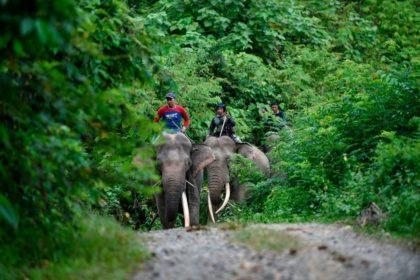 รูปข่าว อินโดฯ ฝึกช้างบ้าน ป้องกันชุมชนโดนช้างป่าบุกรุก