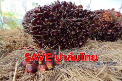 รูปข่าว วาง 3 เครื่องมือ SAVE ปาล์มสัญชาติไทย