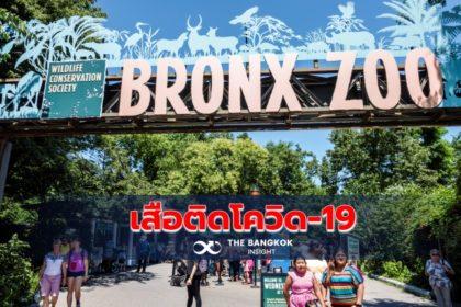 รูปข่าว 'นิวยอร์ก' เจอ 'เสือ-สิงโต' ในสวนสัตว์ติดเชื้อ 'โควิด-19'
