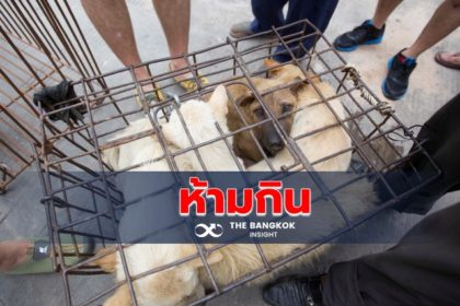 รูปข่าว 'เสิ่นเจิ้น' สั่งห้ามบริโภค 'หมา-แมว' สกัดซ้ำรอย 'โควิด-19'