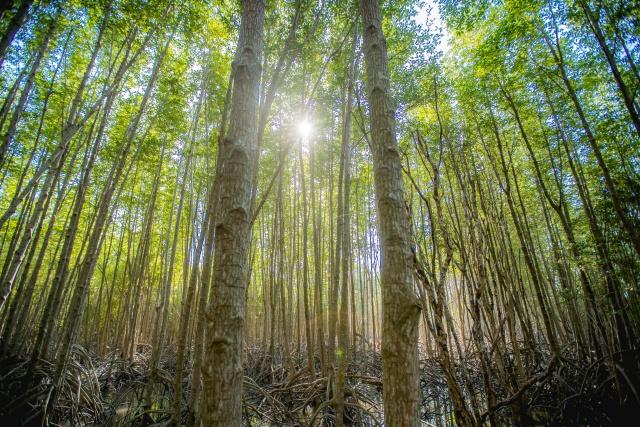 ปลูกป่าชายเลน