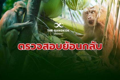 รูปข่าว ลิงเก็บมะพร้าว แก้เกม! ดันเอกชนติด 'รหัสตรวจสอบย้อนกลับ'