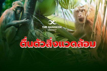 รูปข่าว กรณี 'ลิงเก็บมะพร้าว' สะท้อนอังกฤษ ตื่นตัว 'สิ่งแวดล้อม สิทธิมนุษยชน สวัสดิภาพสัตว์'