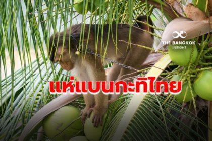 รูปข่าว ข้อกล่าวหา 'ทารุณลิง' เหตุหลายชาติ 'แบน' กะทิไทย