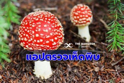 รูปข่าว หน้าฝนเห็ดชุก!! ชวนโหลดแอป 'คัดแยกเห็ดไทย' ตรวจสอบเห็ดมีพิษ
