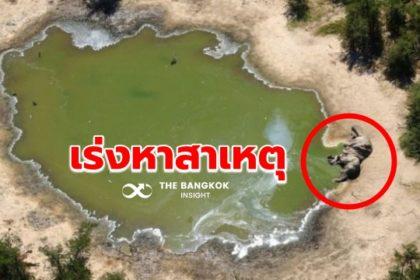 รูปข่าว 'บอตสวานา' เร่งหาสาเหตุ ช้างตายเกลื่อนกว่า 350 ตัว