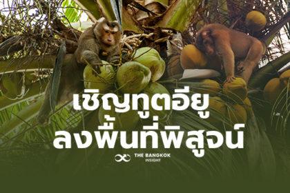 รูปข่าว 'ลิงเก็บมะพร้าว' เรื่องทางวัฒนธรรม 'จุรินทร์' เล็งพาทูตอียูดูถึงที่