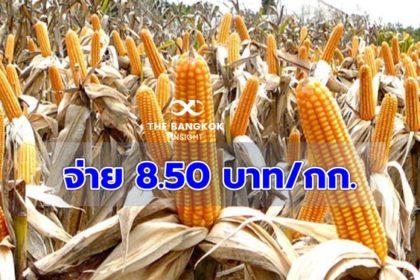 รูปข่าว รอรับได้เลย! จ่ายงวดแรก 20 พ.ย.นี้ ประกันรายได้เกษตรกรปลูกข้าวโพดเลี้ยงสัตว์