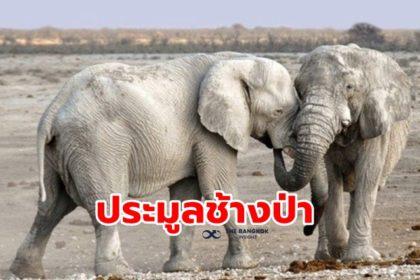 รูปข่าว 'นามิเบีย' เปิดประมูลช้างป่า 170 ตัว หลังอนุรักษ์สำเร็จจนจำนวนพุ่งพรวด