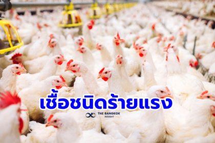 รูปข่าว 'เกาหลีใต้' เจอติดเชื้อไข้หวัดนก H5N8 รายที่ 2 สั่งกำจัดสัตว์ปีก 5 แสนตัว