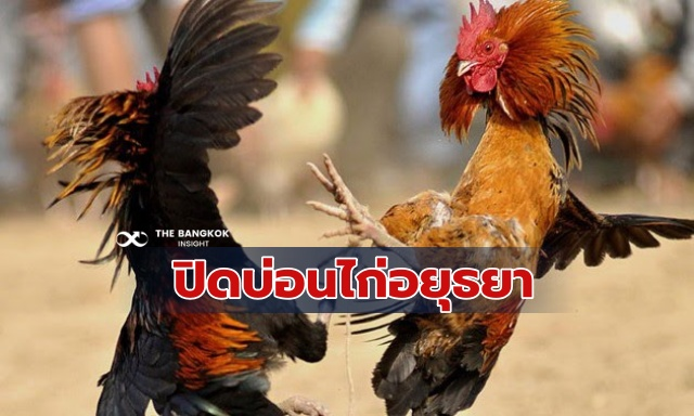 บ่อนไก่