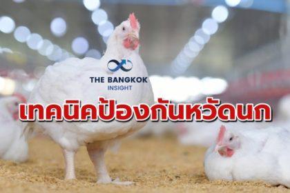 รูปข่าว คอมพาร์ทเม้นต์ 'ไก่เนื้อ' ปราการสำคัญต้านหวัดนก-โรคสัตว์ปีก