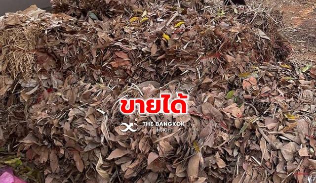 ใบไม้แห้ง