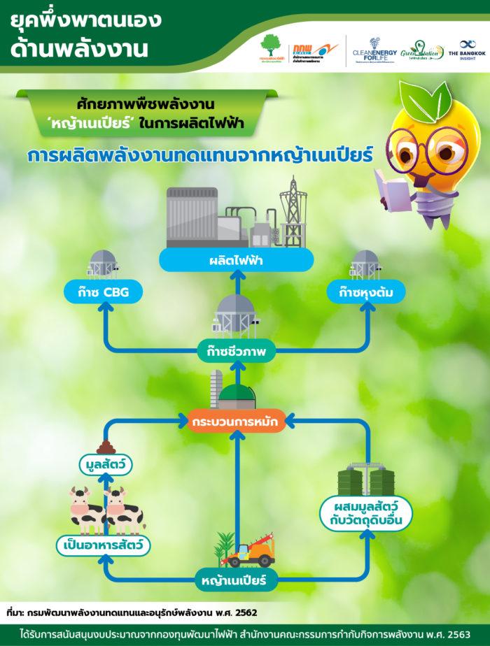 ศักยภาพพืชพลังงาน 'หญ้าเนเปียร์'