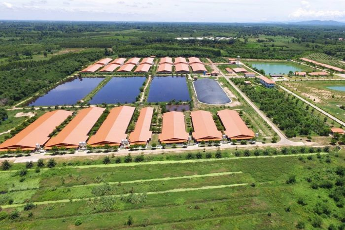 ฟาร์มหมู 1