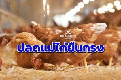 รูปข่าว 'ซีพีเอฟ' ขานรับเร่งแก้ราคาไข่ตกต่ำ – ปรับลดแม่ไก่ยืนกรง