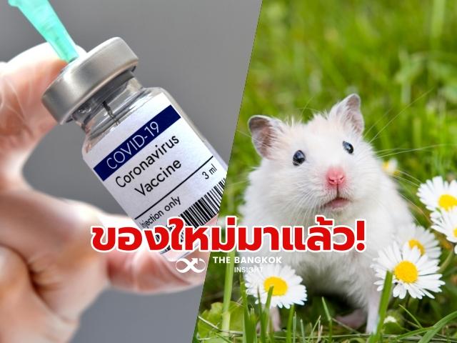 วัคซีน หนูแฮมสเตอร์