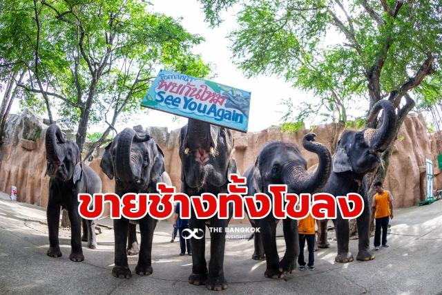 สวนเสือศรีราชา ขายช้าง