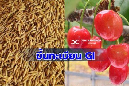 รูปข่าว 'พาณิชย์' ขึ้นทะเบียน GI ใหม่ 'ข้าวขาวกอเดียวพิจิตร-เชอร์รี่ฮิกาชิเนะ'