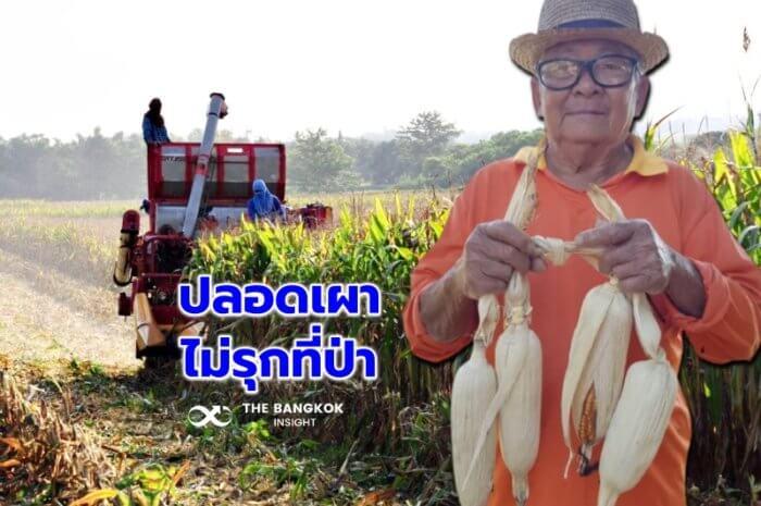 Corn 589