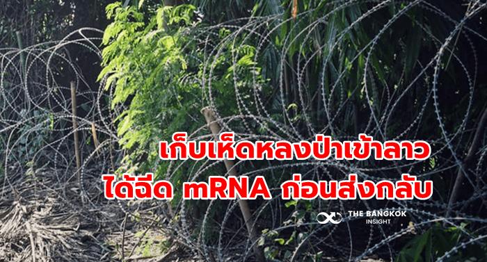 คนไทยเก็บเห็ด