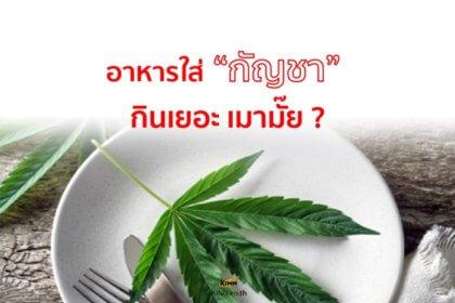 รูปข่าว 'อาหาร' ใส่ 'กัญชา' กินเยอะจะเมามั๊ย?