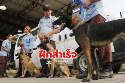 รูปข่าว สำเร็จ! กัมพูชาฝึก 'สุนัขดมกลิ่น' ตรวจจับโควิด-19