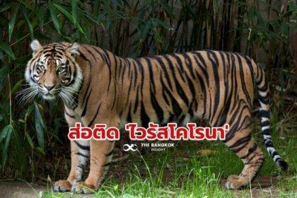 รูปข่าว 'สิงโต-เสือ' สวนสัตว์แห่งชาติสหรัฐ ส่อแววติด 'ไวรัสโคโรนา'
