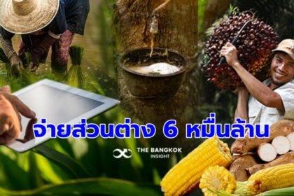 รูปข่าว ประกันรายได้เกษตรกรปี 2 จ่ายส่วนต่างกว่า 6 หมื่นล้าน ปี 3 รอครม.เคาะ
