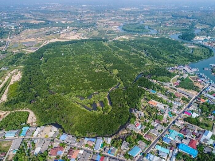 สถาบันปลูกป่า